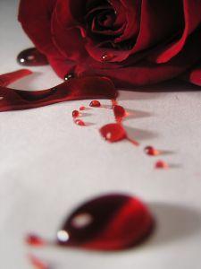 rosa-y-sangre